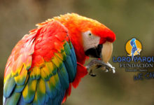 Poachers positively select parrot species based on their attractiveness