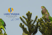 Improving wild parrot population estimates: the Vinaceous-breasted Parrot example