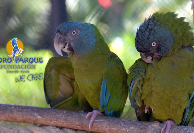 Preventive measures for the management of parrots at Loro Parque Fundación