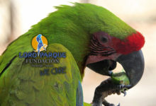 Health screening of macaws in wildlife rehabilitation centres in Costa Rica