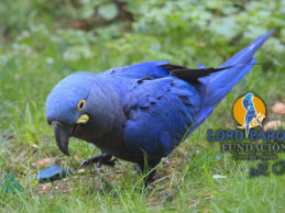 The importance of substrate for parrots at Loro Parque Fundación